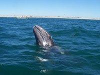 Observando a las ballenas