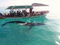 Tour para ver las ballenas
