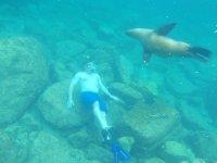 Nadando con los lobos marinos