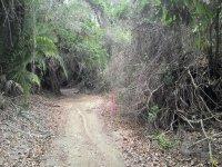 rutas en el bosque