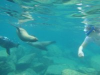 Convivir con focas