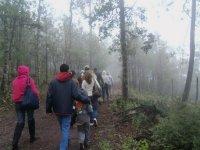 Walks in the fog