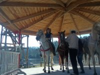 Horseback riding with guide