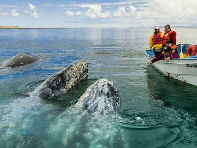 Tours in Baja Whale Watching