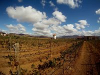 Viñedos del Valle de Guadalupe