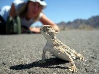 Discover a Wildlife Adventure