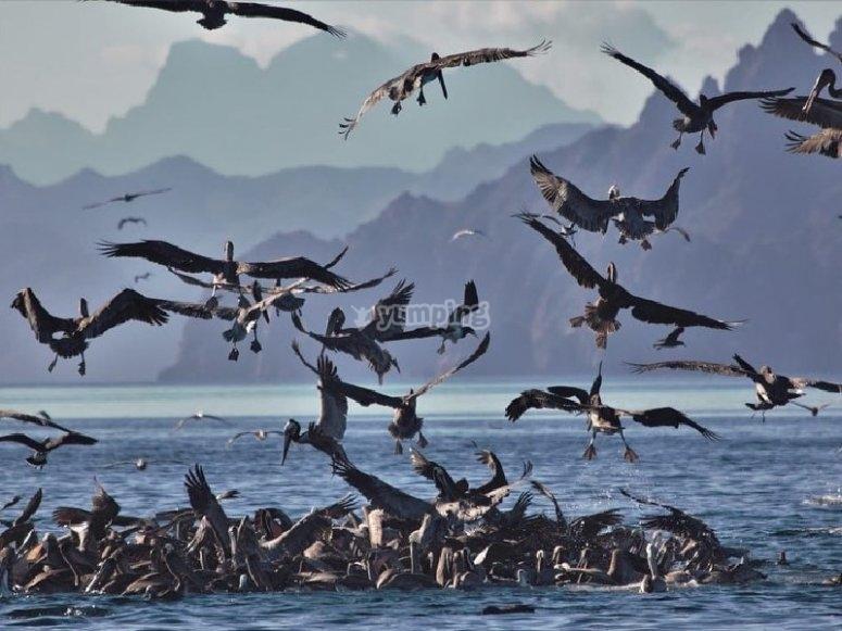 Aves Cazadoras