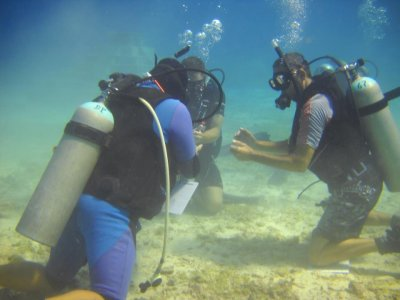 Divemaster Internships