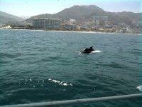 delfines en vallarta