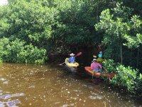 kayaks in the mangroves