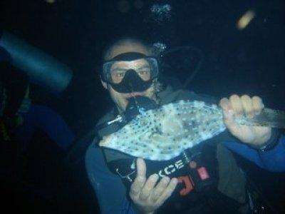 Techs Mex Divers