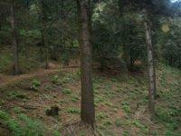 Pierdete en el bosque