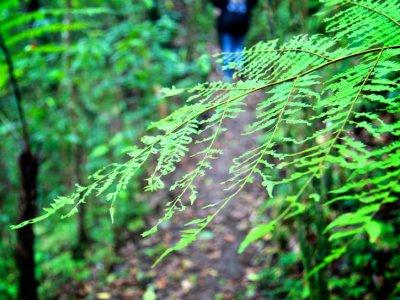 Aldea del Buen Vivir Caminata