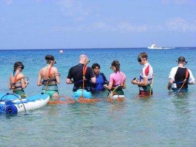 Sand Dollar Sports Snorkel