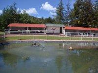 estanque de patos