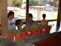 taller de plantas