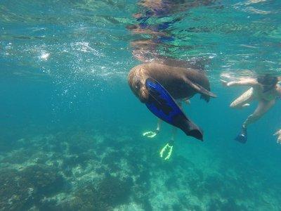 SunRider Adventures  Snorkel