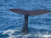 Alimenta a la ballena gris