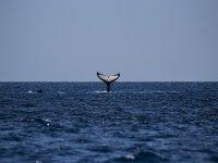 Ve como se va la ballena