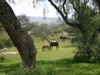 Landscapes on horseback