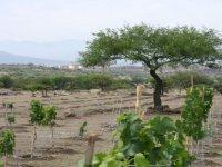 Vineyards in San Miguel