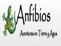 Anfibios Cañonismo