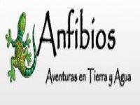 Anfibios