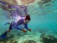Knowing the marine fauna