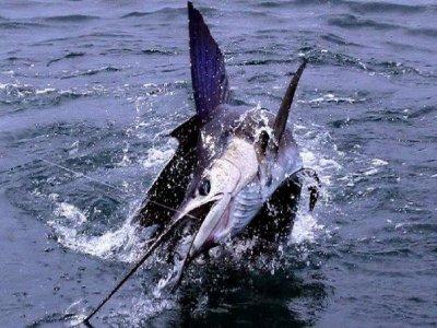 Fishing Charters PV