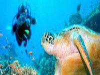 Buceo las Animas bay