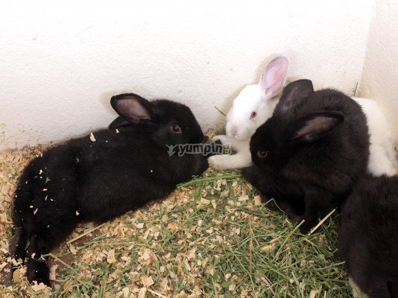 Pet the rabbits