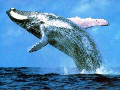 Adventure Park Puerto Vallarta Whale Watching