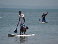 paddle sup con mascotas