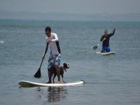 paddle sup with pets