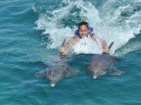 Ride dolphin