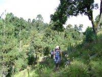 Caminando el monte