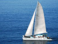 Catamaran for large groups