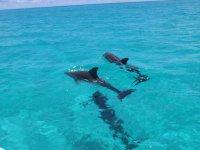 Con los delfines