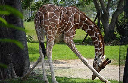Safaris en México