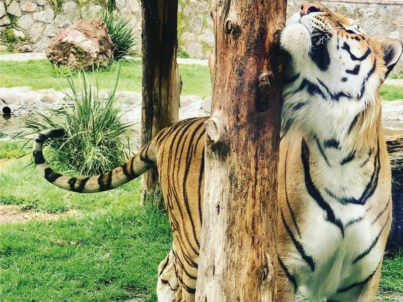 Un día en contacto con todo tipo de especies animales