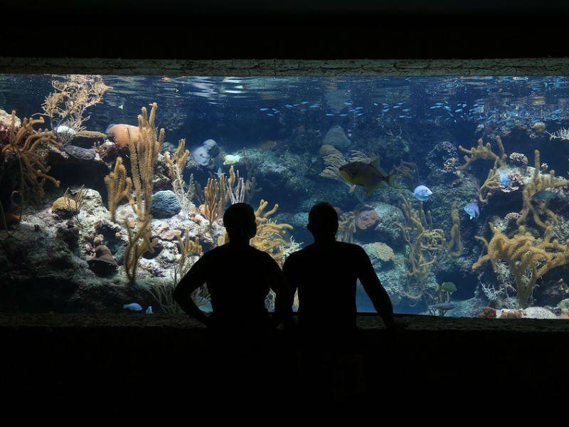 Visitar acuarios tiene más beneficios de los que te imaginas
