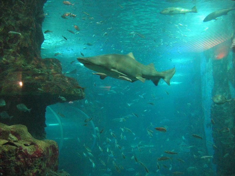 Desde pequeños peces hasta tiburones
