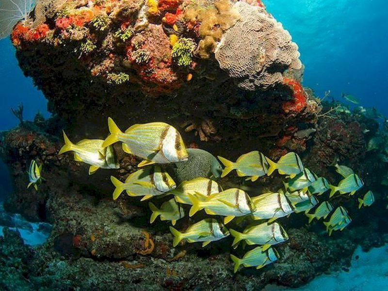 Discover the marine life