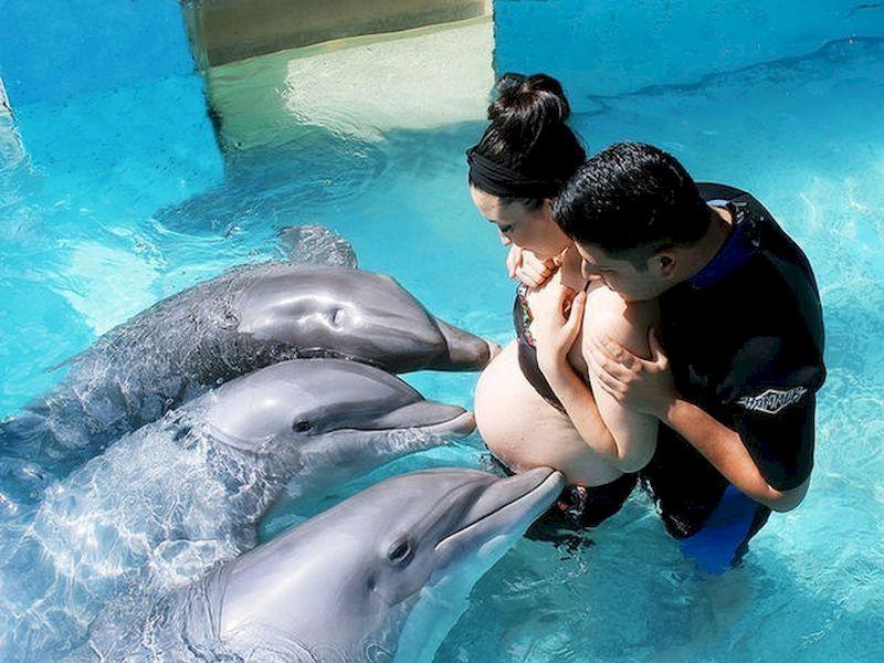 Nadar con delfines sirve como terapia
